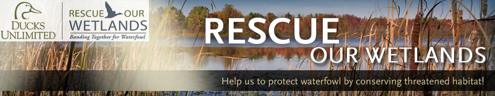 Help Rescue Our Wetlands!